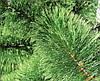 Искуственная сосна Tree Joy 1.2 метра «Распушенная» с удобной сборкой и подставкой, фото 2