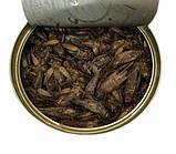 Цвіркун консервований Onto корм для комахоїдних тварин 40 г, фото 2