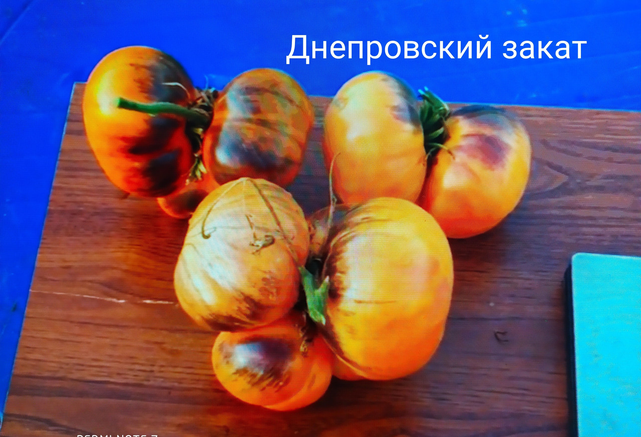 Томат Днепровский закат