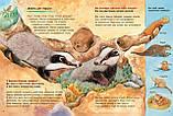 Детская книга Животные-строители. Познавательные истории  Для детей от 3 лет, фото 2