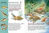 Детская книга Животные-строители. Познавательные истории  Для детей от 3 лет, фото 4