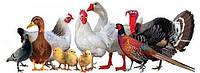 Товары для птицеводства
