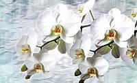 Фотообои 3D цветы 254х184 см Ветка орхидеи на голубом фоне (1667CN)