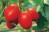 Семена томата Колибри F1 1000 семян (индетерминантный), фото 2