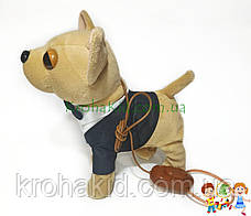 Детская музыкальная собачка HNR383 Чихуахуа на поводке : ходит, гавкает, машет хвостиком, поет, фото 3