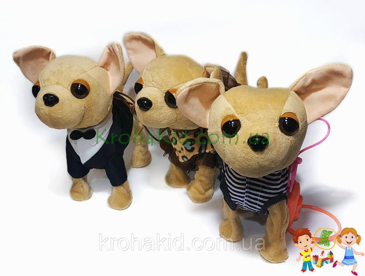 Детская музыкальная собачка HNR383 Чихуахуа на поводке : ходит, гавкает, машет хвостиком, поет