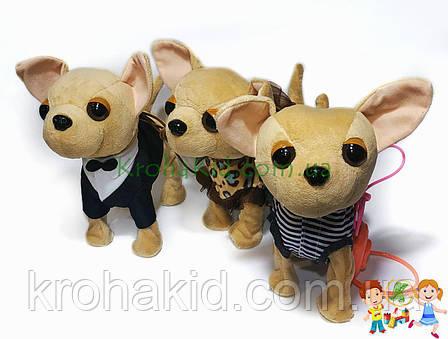 Детская музыкальная собачка HNR383 Чихуахуа на поводке : ходит, гавкает, машет хвостиком, поет, фото 2