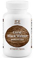 Корал чёрный орех