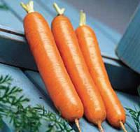 Семена моркови Дордонь F1, Syngenta 100 000 семян (1.6+мм)