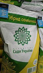 Семена подсолнечника Солярис НС Х 6376 Стойкий к  7рас Заразихи A-G Засухоустойчивый