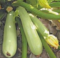 Семена кабачка ранний гибрид Дафна F1 Syngenta для открытого грунта, профупаковка 500 семян, фото 1