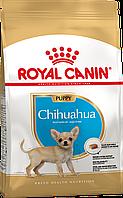 АКЦІЯ Royal Canin Junior Chihuahua сухий корм для цуценят 1,5 КГ + 3 пауча