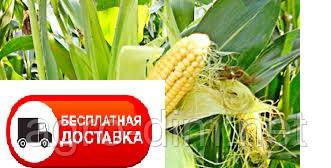 Насіння кукурудзи Данііл ФАО 280, фото 2