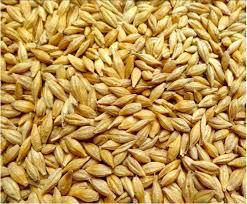 Семена ярового ячменя ВСЕСВИТ элита 1 репродукция