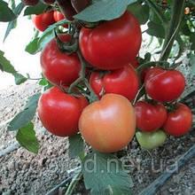Квалітет(Т-97082 F1) 500 шт насіння томату среднерослого Syngenta Голландія