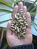 Пеллеты 8 мм в бигбэгах Ирпень (форма 2) древесные зольность до 0,7%