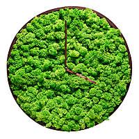 Годинник з моху в дерев'яній рамі, фото 1