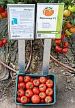 Капонет F1 500 шт семена томата среднерослого Syngenta Голландия, фото 2