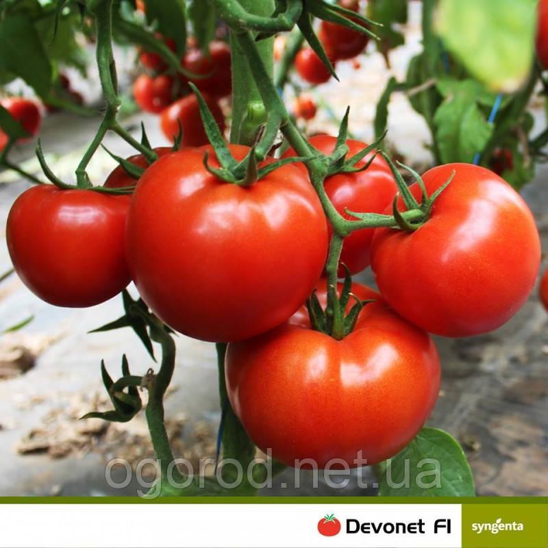 Девонет F1 10 шт семена томата среднерослого Syngenta Голландия