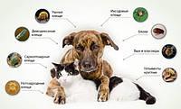 Anitox (Анитокс) - капли от паразитов и глистов для кошек и собак. Фирменный магазин.
