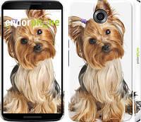 """Чехол на Motorola Nexus 6 Йоркширский терьер с хвостиком """"930c-67"""""""