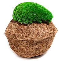Декор з кочкового моху
