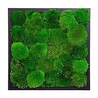 Картина з кочкового моху