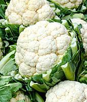 Семена капусты цветной Кердос 1 шт из проф пакета, Семенис