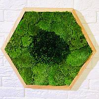Стабілізований мох в сотах