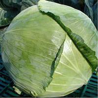 Семена капусты белокочанной Колорит F1 1 шт из проф пакета, Moravoseeds