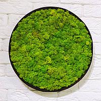 Картина з моху Ягель