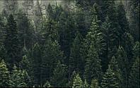 Пазл - Аромат леса 180х130 мм