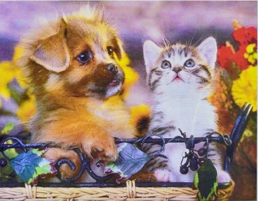 Котята и собачки