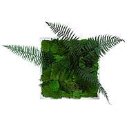 Картина з мохом і рослинами