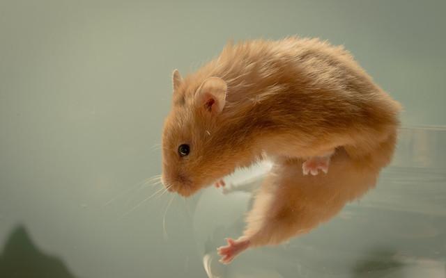 Отпугиватели животных, насекомых, комаров, грызунов, мышей и собак