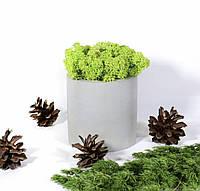 Бетонний кашпо з моху