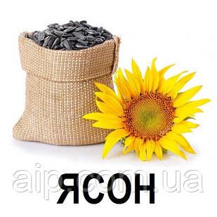 Семена Подсолнечника Ясон (20 кг)