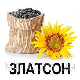 Семена Подсолнечника Златсон (20 кг)