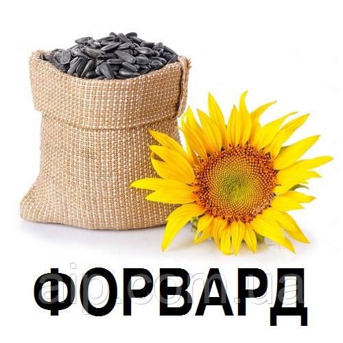 Семена Подсолнечника Форвард (20 кг)