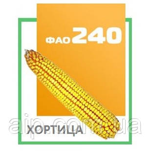 Семена кукурузы - гибрид  ДН Хортица