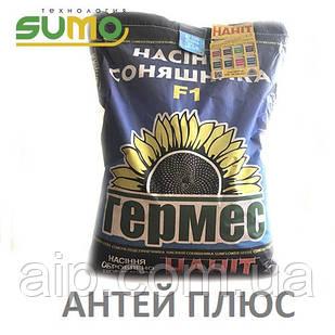 Семена подсолнечника Антей Плюс (Технология Sumo)