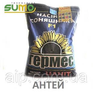 Семена подсолнечника Антей (Технология Sumo)