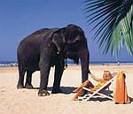 Отдых на Шри-Ланке из Днепра / туры на Шри-Ланку из Днепра, фото 5