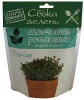 Домашнее растение Чебрец (тимьян), 0,5 л