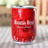Цветок в банке Роза