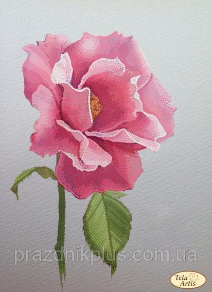 """Схема для вышивки на атласе """"Эскиз розы"""""""