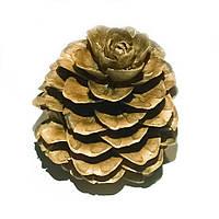 Шишки модрини (лиственницы) натуральні
