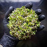 Горчица Проростки, фото 1