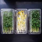 Микрозелень Горох, фото 2