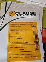 Панамера F1 / Panamera F1 - Томат индетерминантный, Clause. 1000 семян